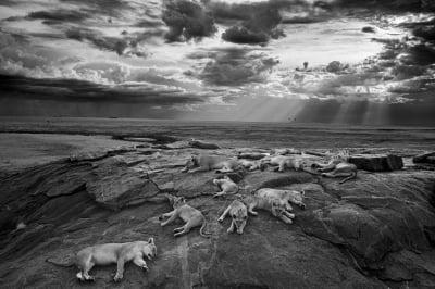 WildlifePhotography (400x266)