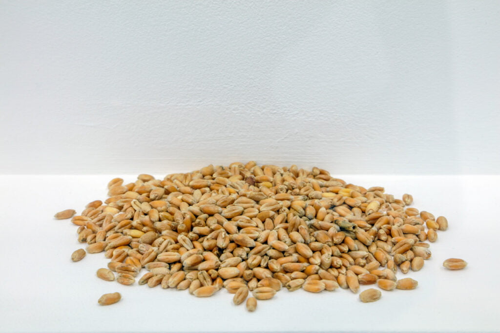 A small pile of light-brown coloured grain on a white shelf, against a white wall.